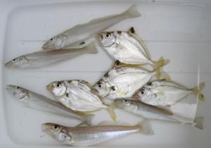 Fishing20110815