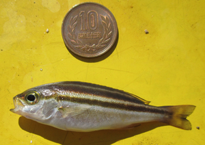 Minifish2